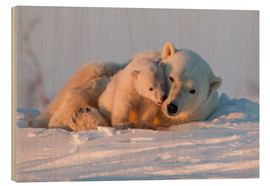 Wood print  Polar bear and cub, Wapusk National Park - David Jenkins