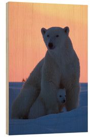 Wood print  Polar bear and cub - David Jenkins