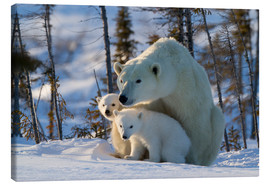Canvas print  Polar bear (Ursus maritimus) with cubs, Canada - David Jenkins