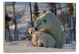 Wood print  Polar bear (Ursus maritimus) with cubs, Canada - David Jenkins