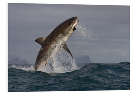 Forex  Great white shark (Carcharodon carcharias), Seal Island, False Bay, Simonstown, Western Cape, South  - David Jenkins