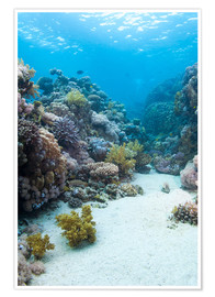Poster  Coral reef in blue water - Mark Doherty