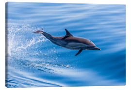 Canvas  Long-beaked common dolphin leaping - Michael Nolan