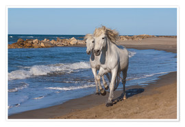 Premium poster  Camargue horses on the beach