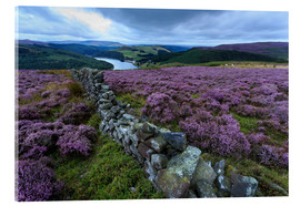 Acrylic print  Heather covered Bamford Moor and dry stone wall - Eleanor Scriven