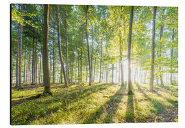Aluminium print  Forest at sunrise - Hannes Cmarits