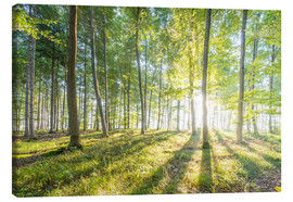 Canvas  Forest at sunrise - Hannes Cmarits
