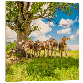Wood print  Calves in the Allgäu - Jan Schuler