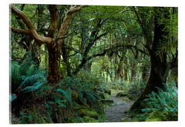 Acrylic print  Primeval forest on kepler track, fiordland, new zealand - Peter Wey
