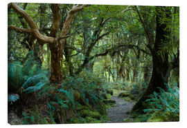 Canvas print  Primeval forest on kepler track, fiordland, new zealand - Peter Wey