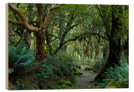 Wood print  Primeval forest on kepler track, fiordland, new zealand - Peter Wey