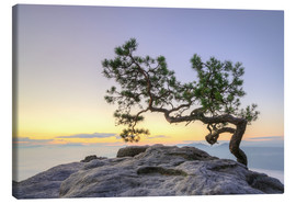 Canvas  pine on the Lilienstein in Saxon Switzerland - Michael Valjak
