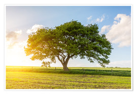 Premium poster The oak tree in summer