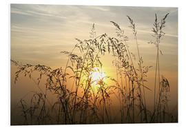 Foam board print  Grasses in Sunrise 2 - Bernhard Kaiser