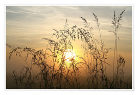 Premium poster Grasses in Sunrise 2