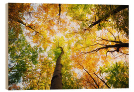 Wood print  Treetops in autumn - Oliver Henze