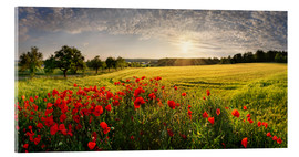 Acrylic print   Poppy Field - Michael Rucker