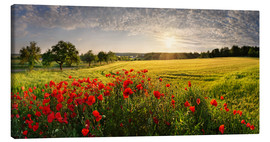 Canvas print  Poppy Field - Michael Rucker