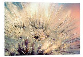 Acrylic glass  Pusteblume sunset - Julia Delgado