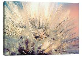 Canvas print  Dandelion sunset - Julia Delgado
