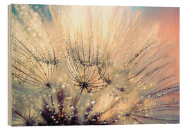 Wood  Pusteblume sunset - Julia Delgado