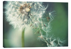Canvas  Dandelion in the wind - Julia Delgado
