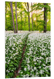 Foam board print  Wild Garlic Trail - Dave Derbis