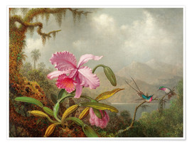 Premium poster Cattleya Orchid and three Brazilian hummingbirds