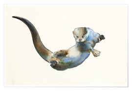 Premium poster  Floating Otter - Mark Adlington