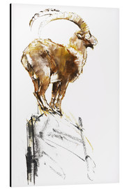 Aluminium print  Ibex ready to jump - Mark Adlington