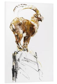 Foam board print  Ibex ready to jump - Mark Adlington