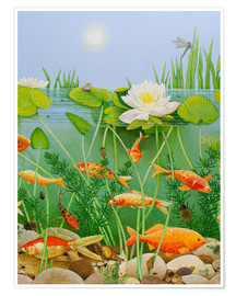 Premium poster Gold fish pond