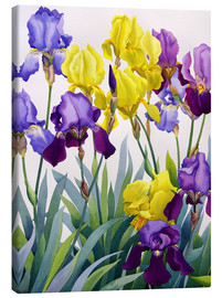 Canvas print  Yellow and purple irises - Christopher Ryland