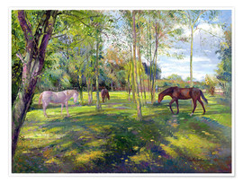 Poster  Horse paddock - Timothy Easton
