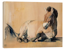 Wood print  laying Przewalski horse - Mark Adlington