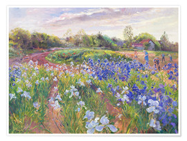 Premium poster Field of flowers