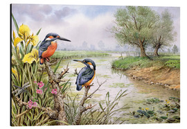 Aluminium print  Kingfishers on the riverbank - Carl Donner