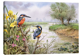 Canvas print  Kingfishers on the riverbank - Carl Donner