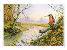 Premium poster  Kingfisher: scene on autumnal river - Carl Donner