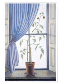 Premium poster  Plant in the window, 2003 - Ruth Addinall