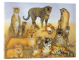 Acrylic print  Various big cats - Pat Scott