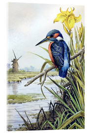 Acrylic print  Kingfisher with iris and windmill - Carl Donner