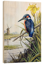 Wood print  Kingfisher with iris and windmill - Carl Donner