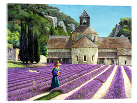 Acrylic print  Lavender picker, Abbaye Senanque, Provence - Trevor Neal