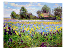Acrylic glass  Blumenfeld - Timothy Easton