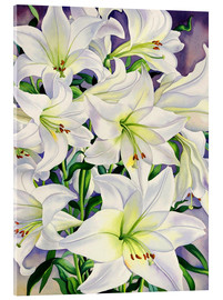 Acrylic print  White lilies, 2008 - Christopher Ryland