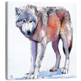 Canvas print  Wolf - Mark Adlington