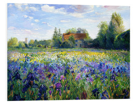Forex  Field of flowers in the sunset - Timothy Easton