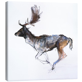 Canvas print  Galloping Buck - Mark Adlington