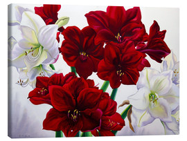 Canvas  Red and White Amaryllis, 2008 - Christopher Ryland